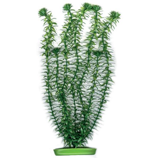 Plante pentru acvariu Hagen Marina Anacharis, 20 cm