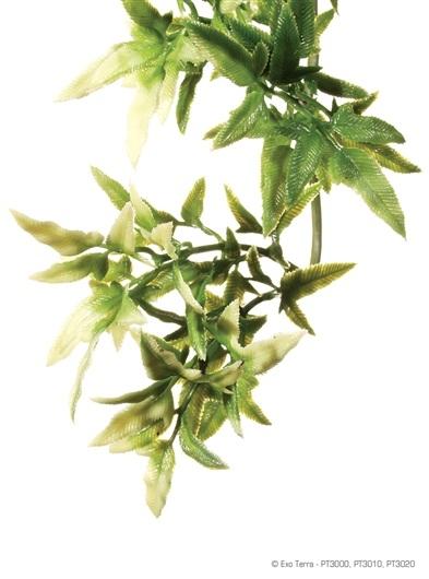 Plante terariu Hagen Croton Large