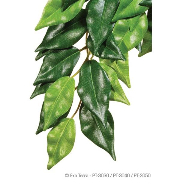 Plante terariu Hagen Ficus Small