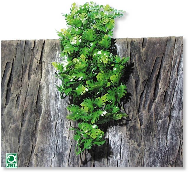Plante pentru terariu, JBL TerraPlanta Amaz.Philo S 11